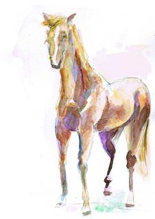 馬.jpg